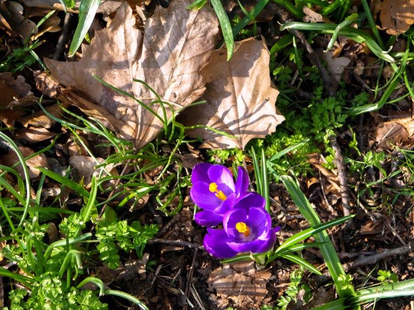 Kew Gardens Spring (14)