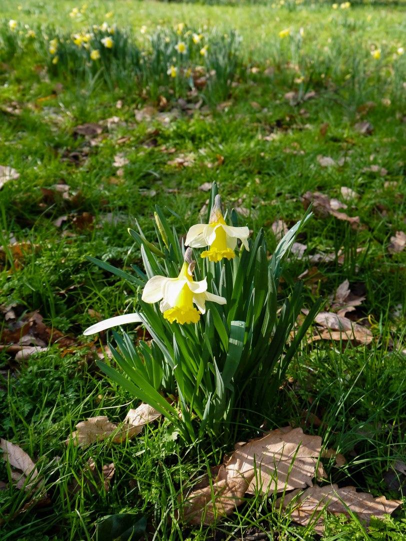 Kew Gardens Spring (15)