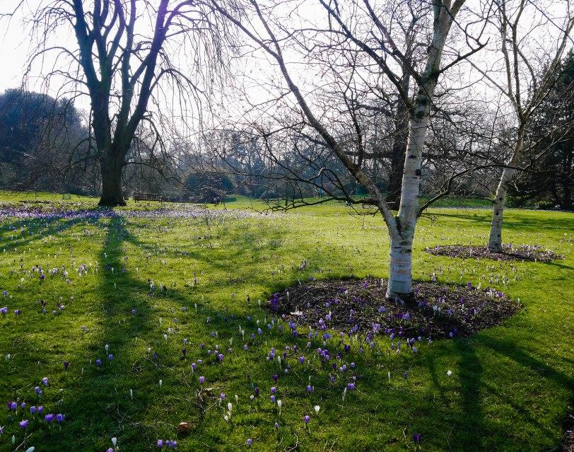 Kew Gardens Spring (2)