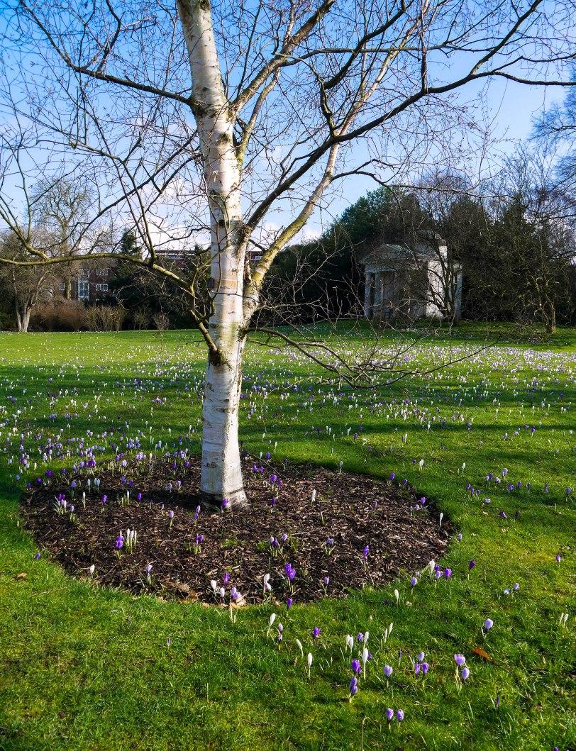 Kew Gardens Spring (3)