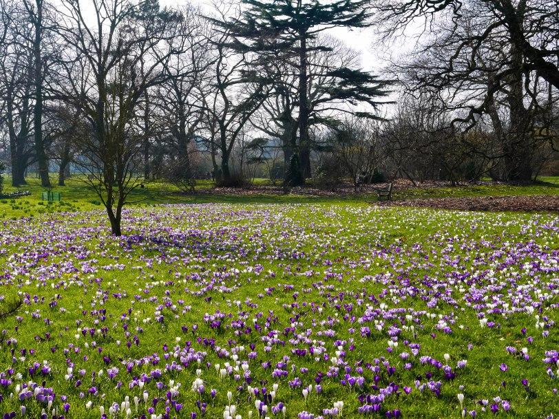 Kew Gardens Spring (6)