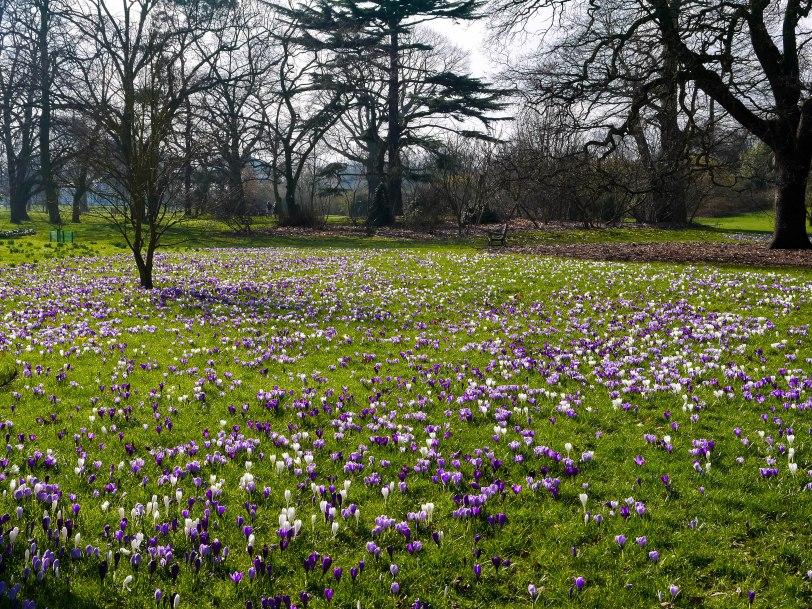 Kew Gardens Spring (7)