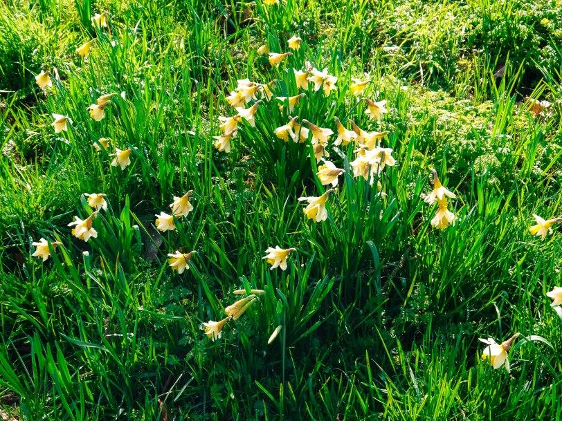 Kew Gardens Spring (9)