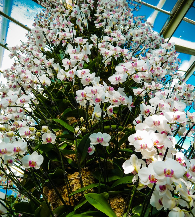 Orchid Show (1)
