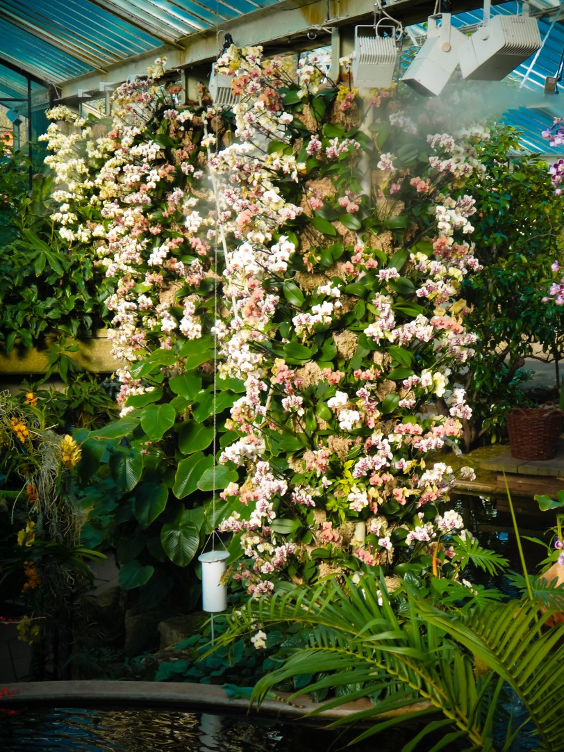 Orchid Show (20)