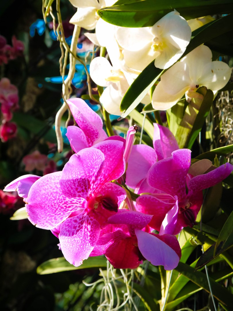 Orchid Show (21)