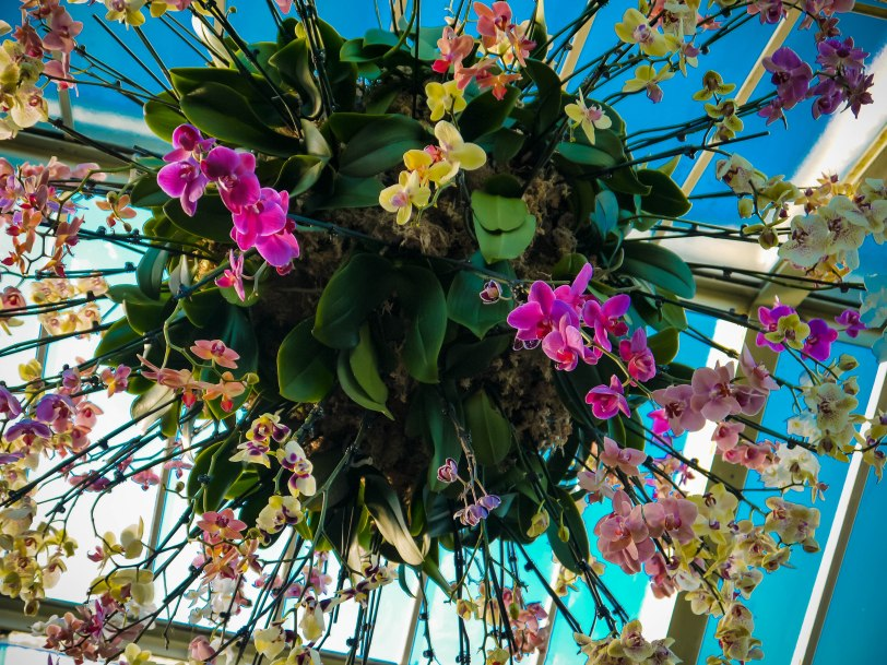 Orchid Show (27)