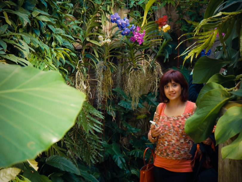 Orchid Show (4)