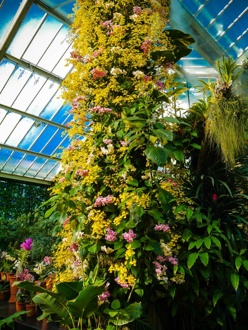 Orchid Show (5)
