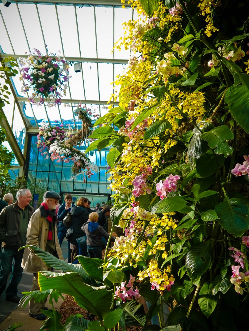 Orchid Show (6)