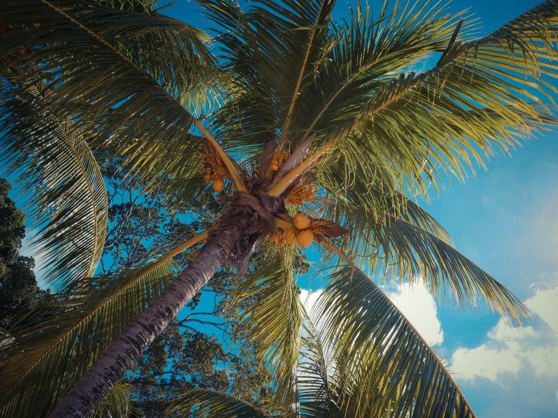 ShadeofRedBlog Barbados Travel 13