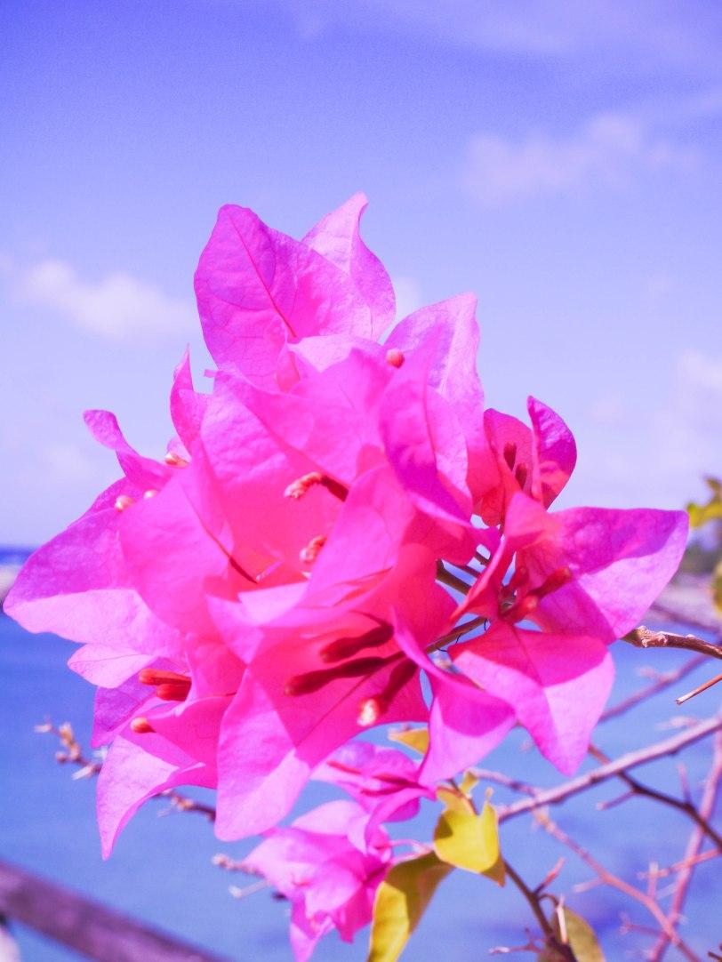 ShadeofRedBlog Barbados Travel 21