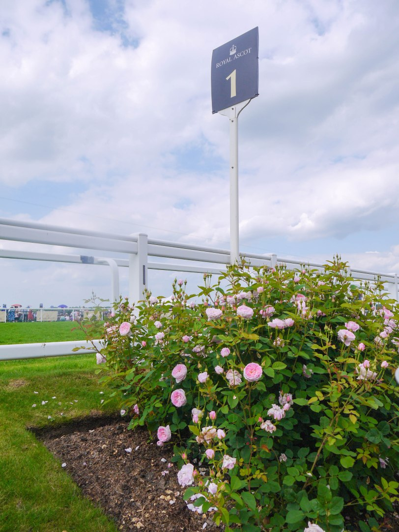 ShadeofRedBlog_Royal_Ascot_2014 (33)