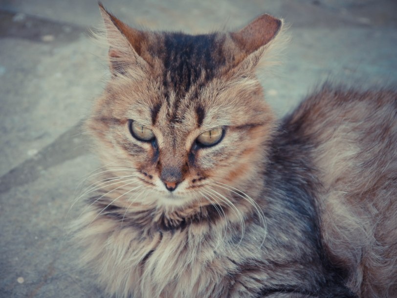 ShadeofRedBlog_Skiathos_Monastery (13)