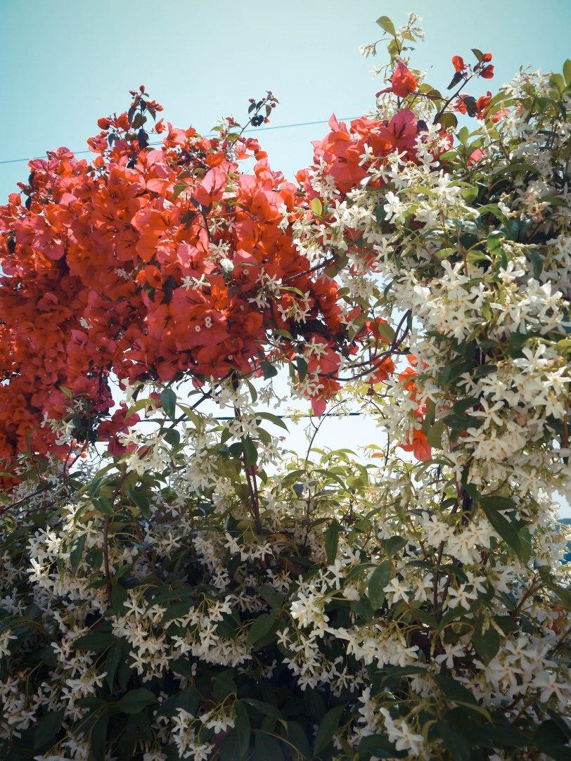 ShadeofRedBlog_Skiathos_Monastery (31)