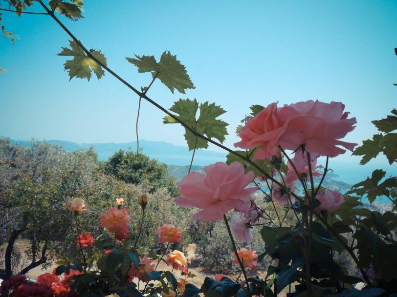 ShadeofRedBlog_Skiathos_Monastery (35)