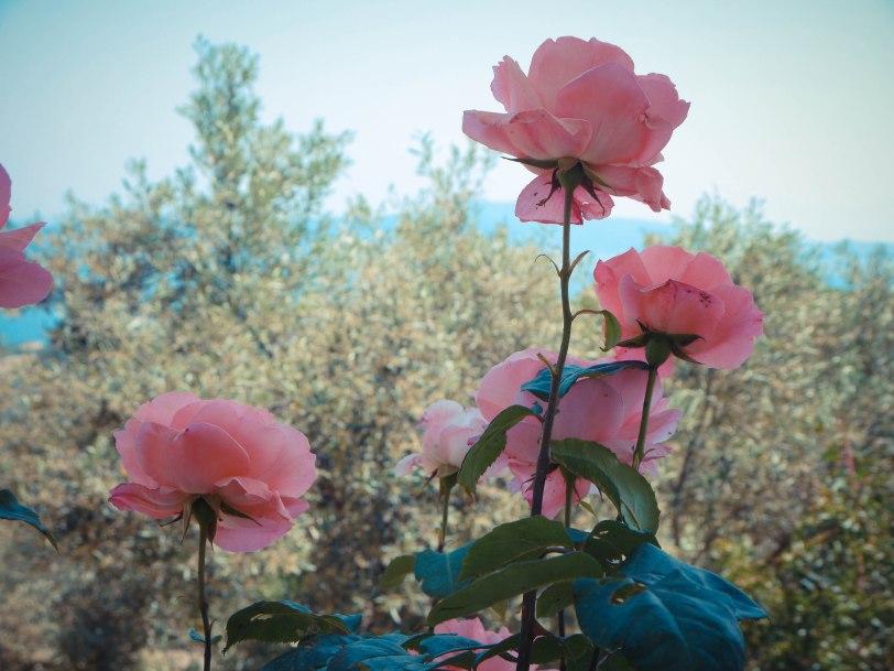 ShadeofRedBlog_Skiathos_Monastery (39)