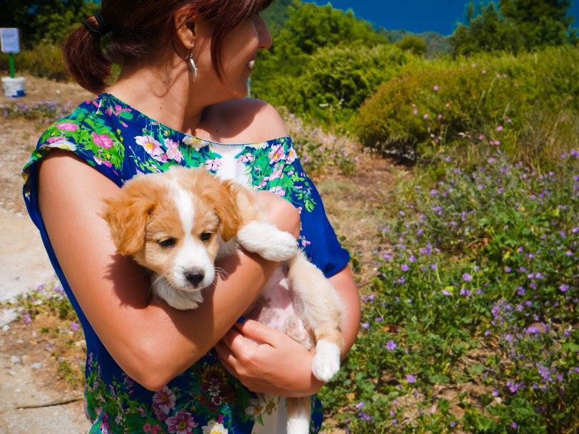 ShadeofRedBlog_Skiathos Dog Shelter (2)