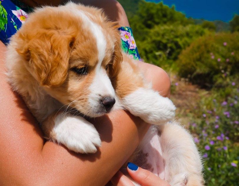 ShadeofRedBlog_Skiathos Dog Shelter (3)