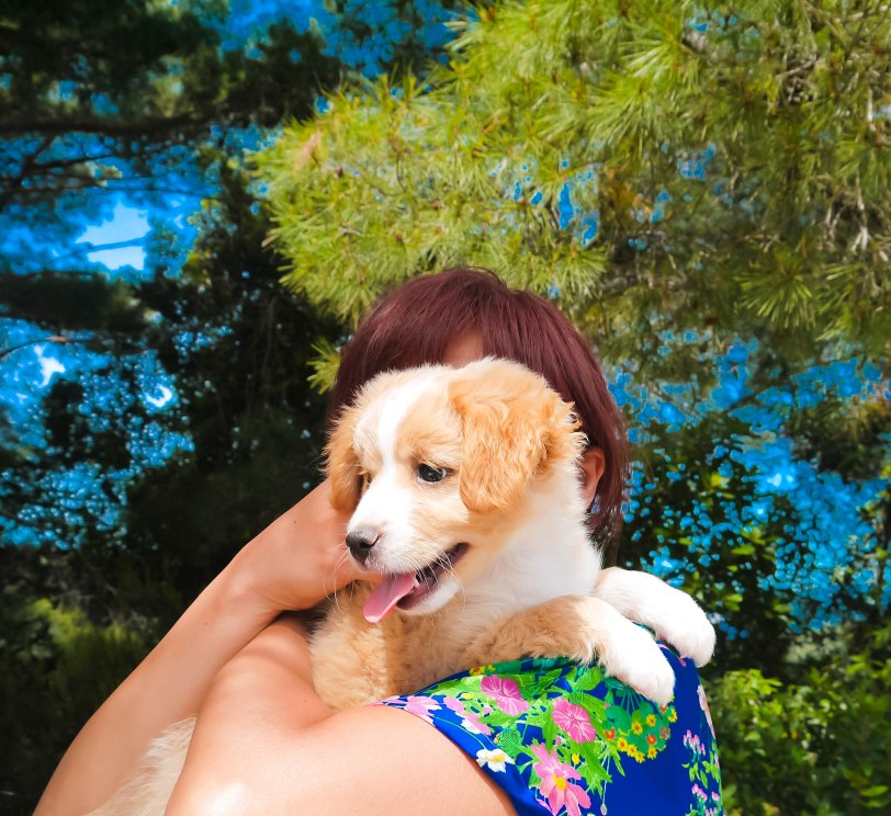 ShadeofRedBlog_Skiathos Dog Shelter (4)
