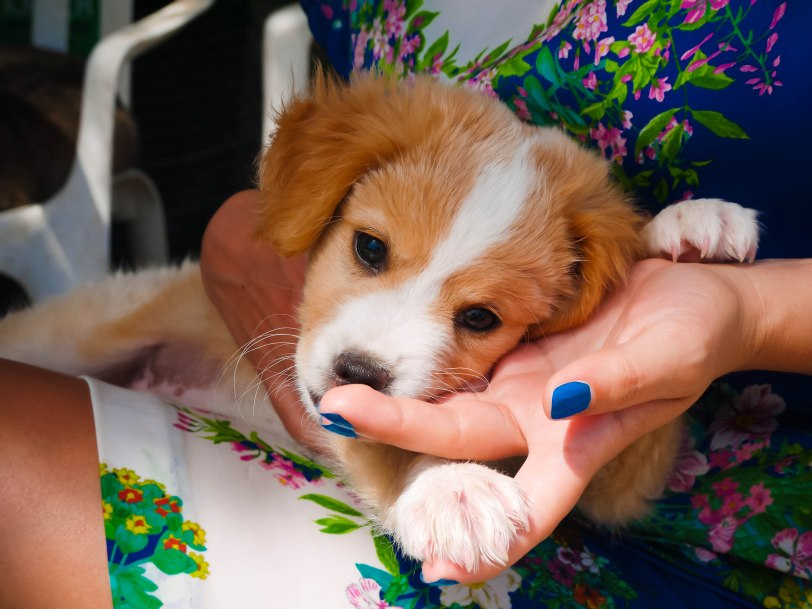 ShadeofRedBlog_Skiathos Dog Shelter (5)