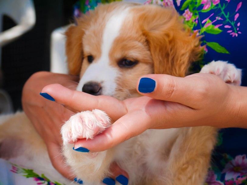 ShadeofRedBlog_Skiathos Dog Shelter (6)