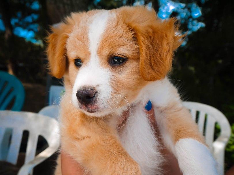 ShadeofRedBlog_Skiathos Dog Shelter (9)