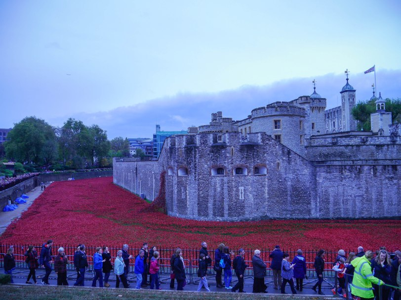 Shade of Red Blog_Tower_Poppies (17)