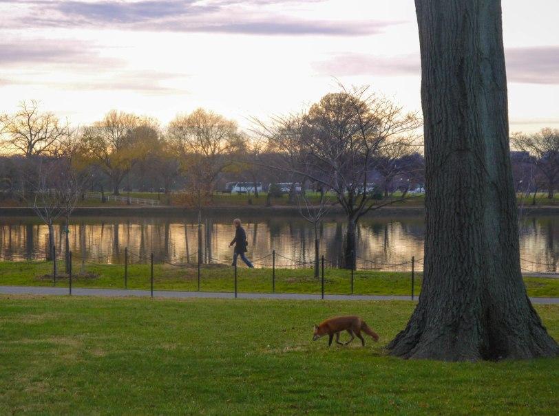 Shade of Red Blog_Washington_sunsets