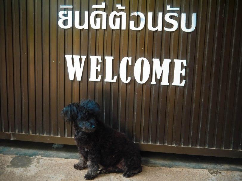 Shade of Red Blog_Phuket-1-15