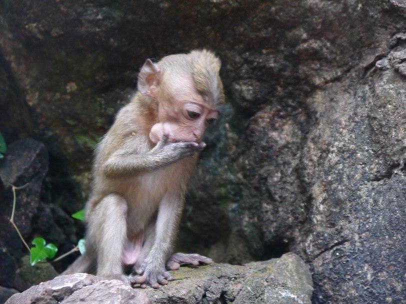 Shade of Red Blog_Phuket-1-20