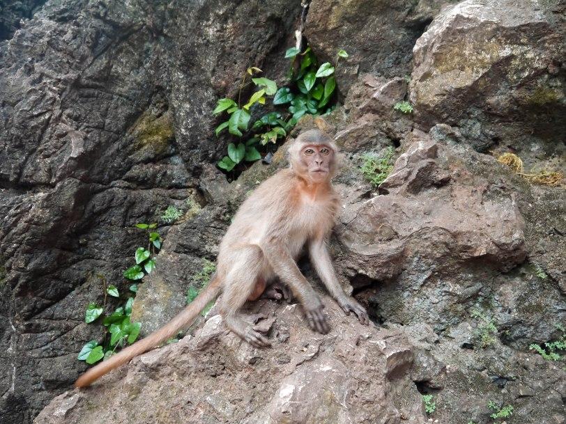 Shade of Red Blog_Phuket-1-22