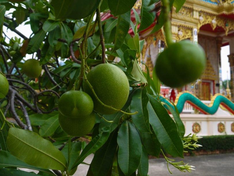 Shade of Red Blog_Phuket-1-5