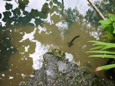 Shade of Red Blog_Botanical Gardens_Singapore (15)