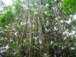 Shade of Red Blog_Botanical Gardens_Singapore (24)