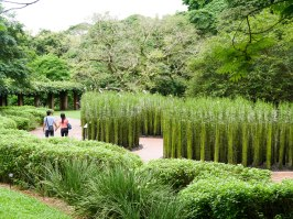 Shade of Red Blog_Botanical Gardens_Singapore (25)