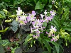 Shade of Red Blog_Botanical Gardens_Singapore (28)