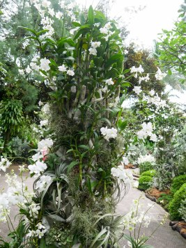 Shade of Red Blog_Botanical Gardens_Singapore (3)