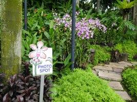 Shade of Red Blog_Botanical Gardens_Singapore (32)