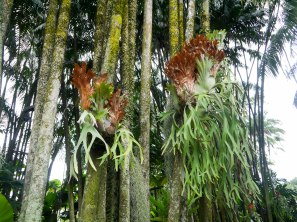 Shade of Red Blog_Botanical Gardens_Singapore (35)