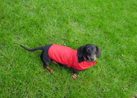 Shade of Red Blog_London_dachshund (12)