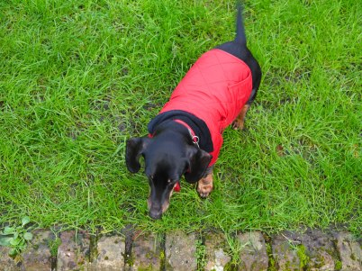 Shade of Red Blog_London_dachshund (13)