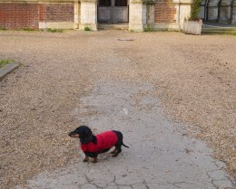 Shade of Red Blog_London_dachshund (3)