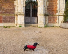 Shade of Red Blog_London_dachshund (4)