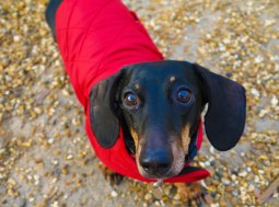 Shade of Red Blog_London_dachshund (5)