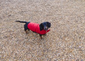 Shade of Red Blog_London_dachshund (6)