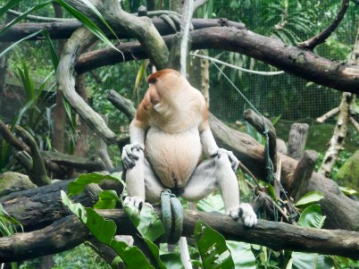 Shade of Red Blog_Singapore Zoo (22)