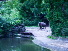 Shade of Red Blog_Singapore Zoo (35)