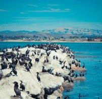 Monterey 066