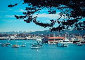 Monterey 072